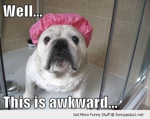 awkward dog